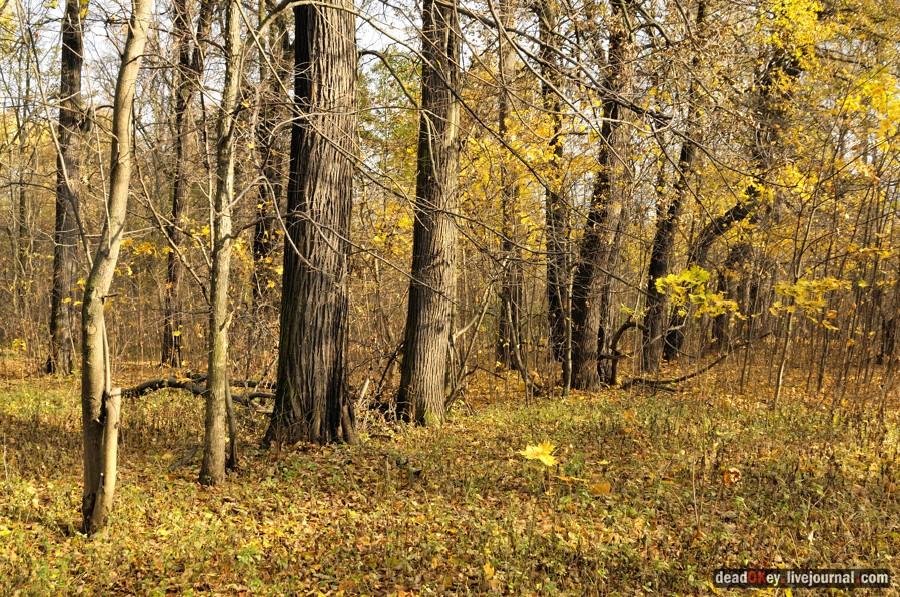 http://www.razumov.biz/foto/manor/obraztsovo/small/obraztsovo_013_deadokey.livejournal.com.jpg