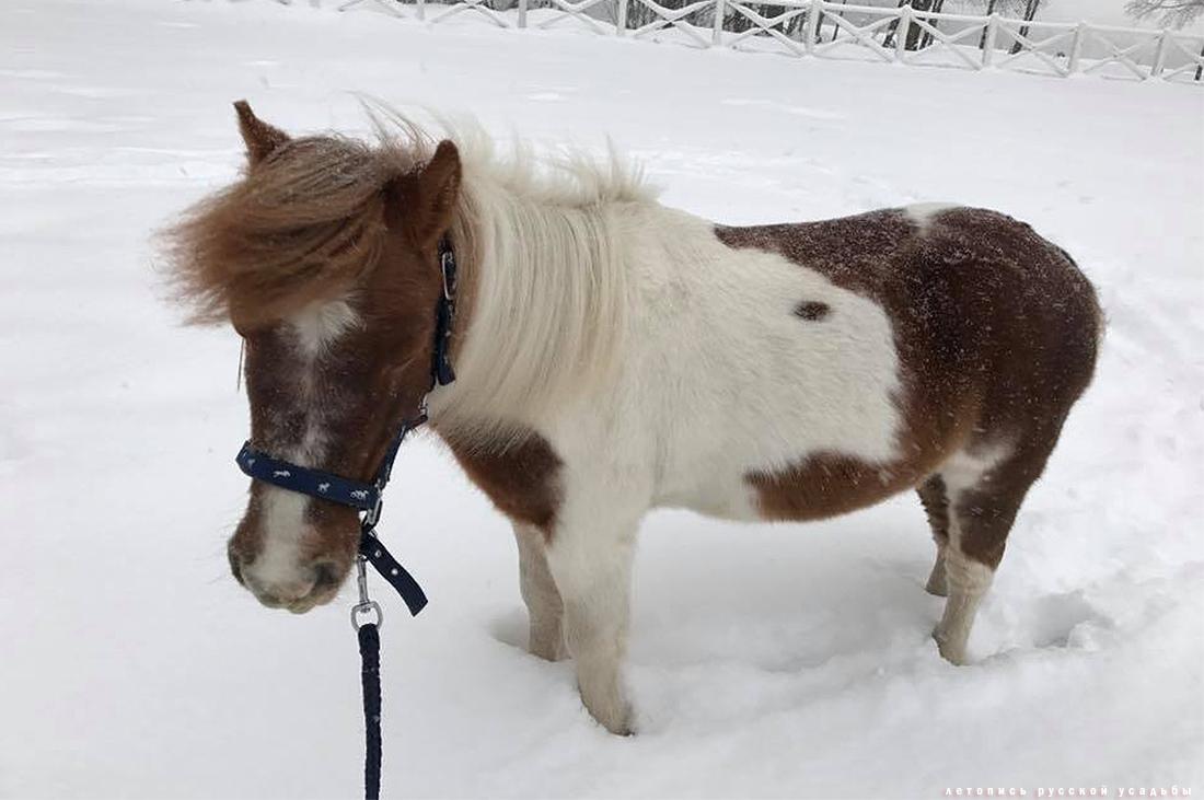 усадьба Степановское-Волосово, фотографии с дрона, шетлендский пони Трамп